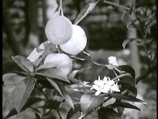Orangen-aus-Zitronen-new.00_04_07_19.Immagine017