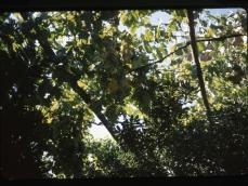 Capri 16-09-1970-03